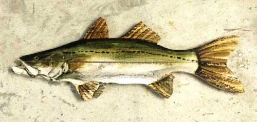 Name:  _wsb_500x249_Snook-on-wood.jpg