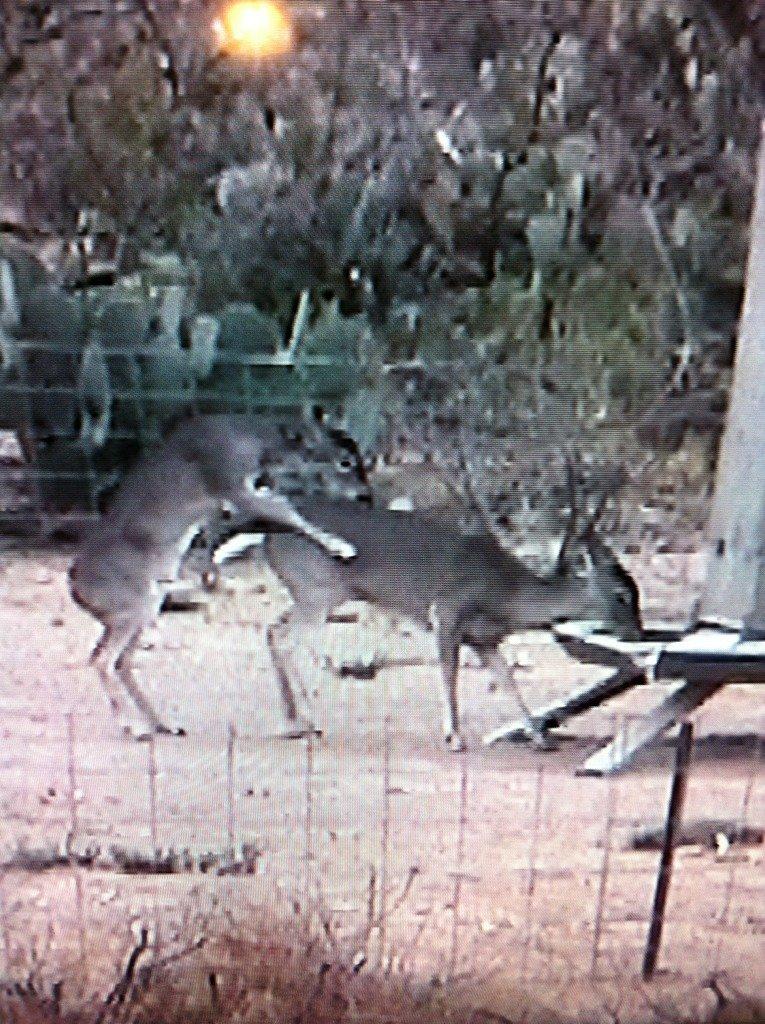 Diy Deer Feeder Timer - Clublifeglobal com